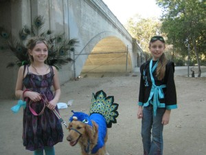 Dog costume contest at Hermon Dog Park